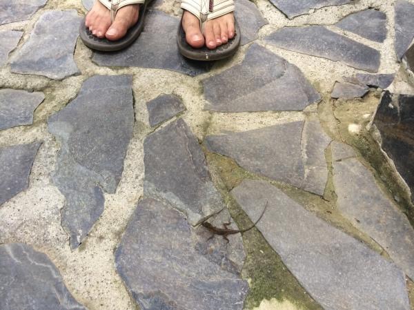 Mini Lizard