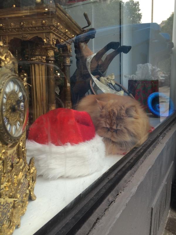 Angry Sleepy Cat