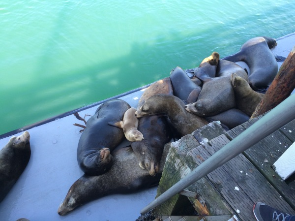 Snuggling Sealions
